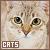 Cats/Kittens: