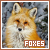 Foxes: